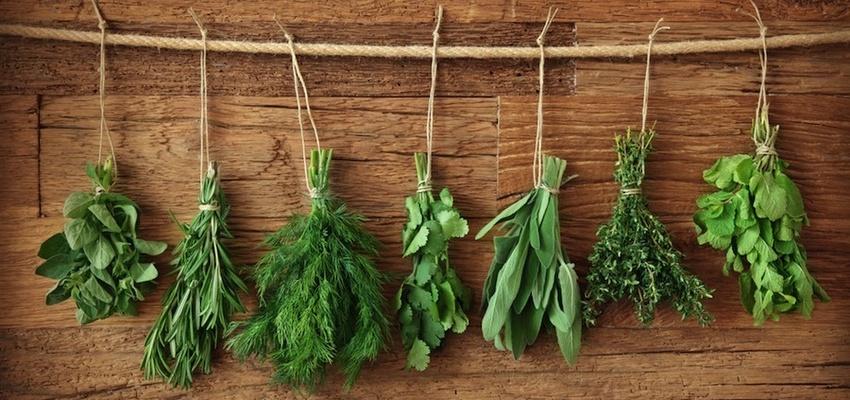 Fűszernövények – így hatnak a fogyásra!