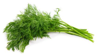 Fűszernövények - kapor